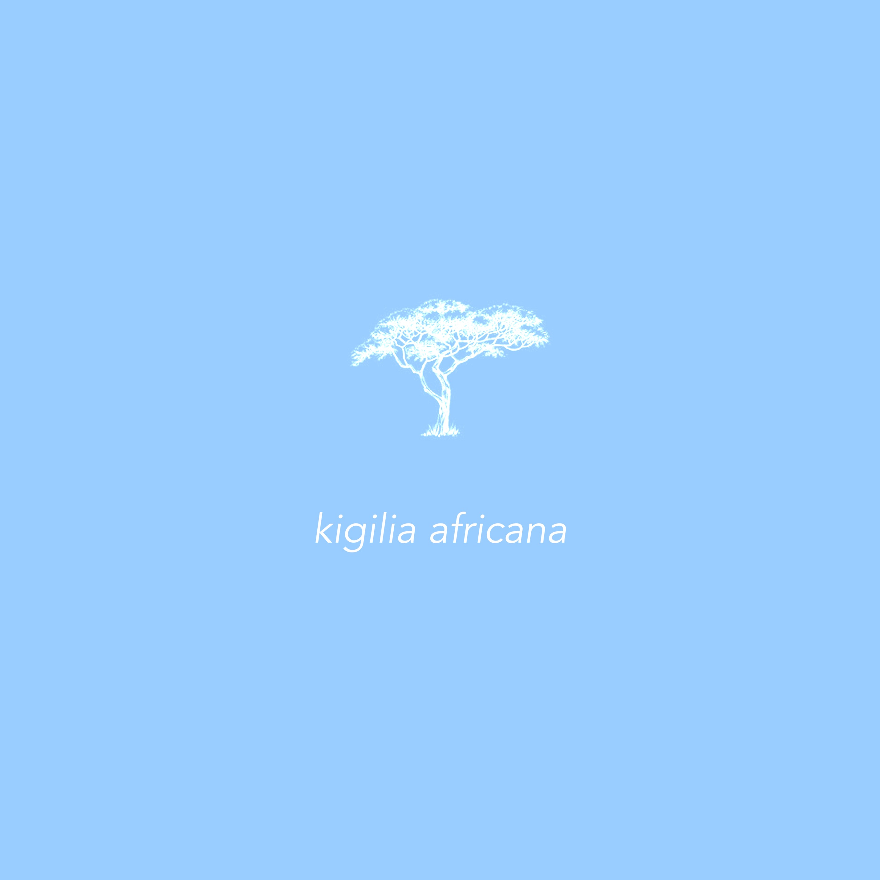 Kigelia Africana Product image