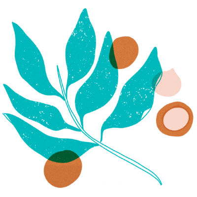 Macadamia Oil - Component Insights